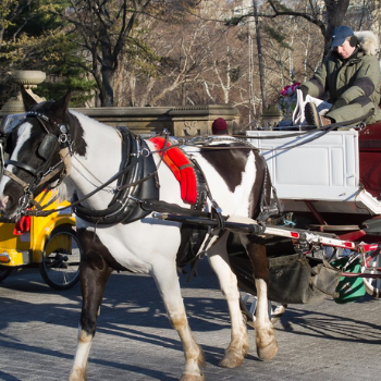 CENTRAL PARK SIGHTSEEING: HORSE AND CARRIAGE TOURS – SAVE OVER 10%