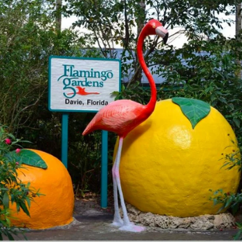 FLAMINGO GARDENS – SAVE 35%