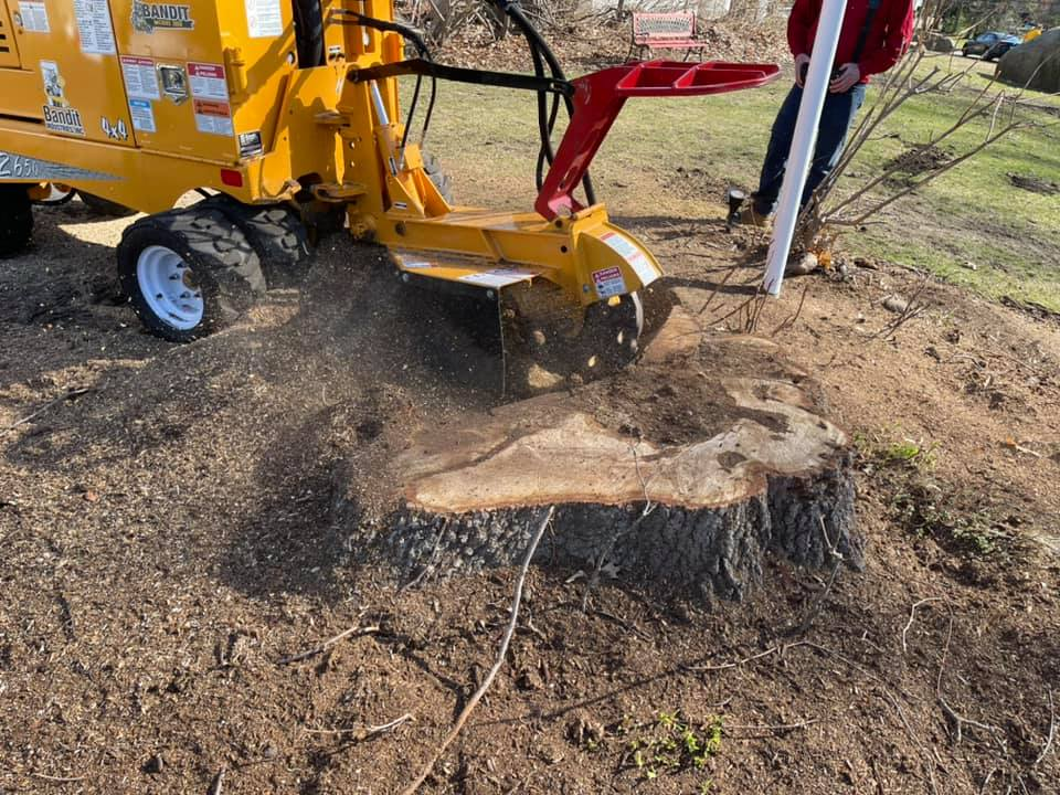 Down to Earth Stump Removal – 10 % OFF for BraveHeroes Members